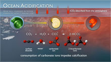 Ocean-acidification chem.jpg